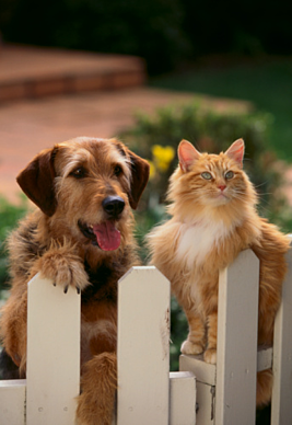 Dog and Cat in homeowners association