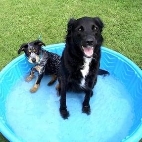 dogs_in_kiddie_pool